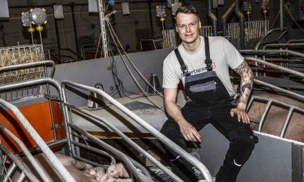 Hauskov Svineproduktion opnår bedre resultater med det nye WinPig og har kærlighed til svin