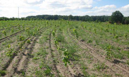 Plant skov og beskyt grundvandet med attraktivt tilskud