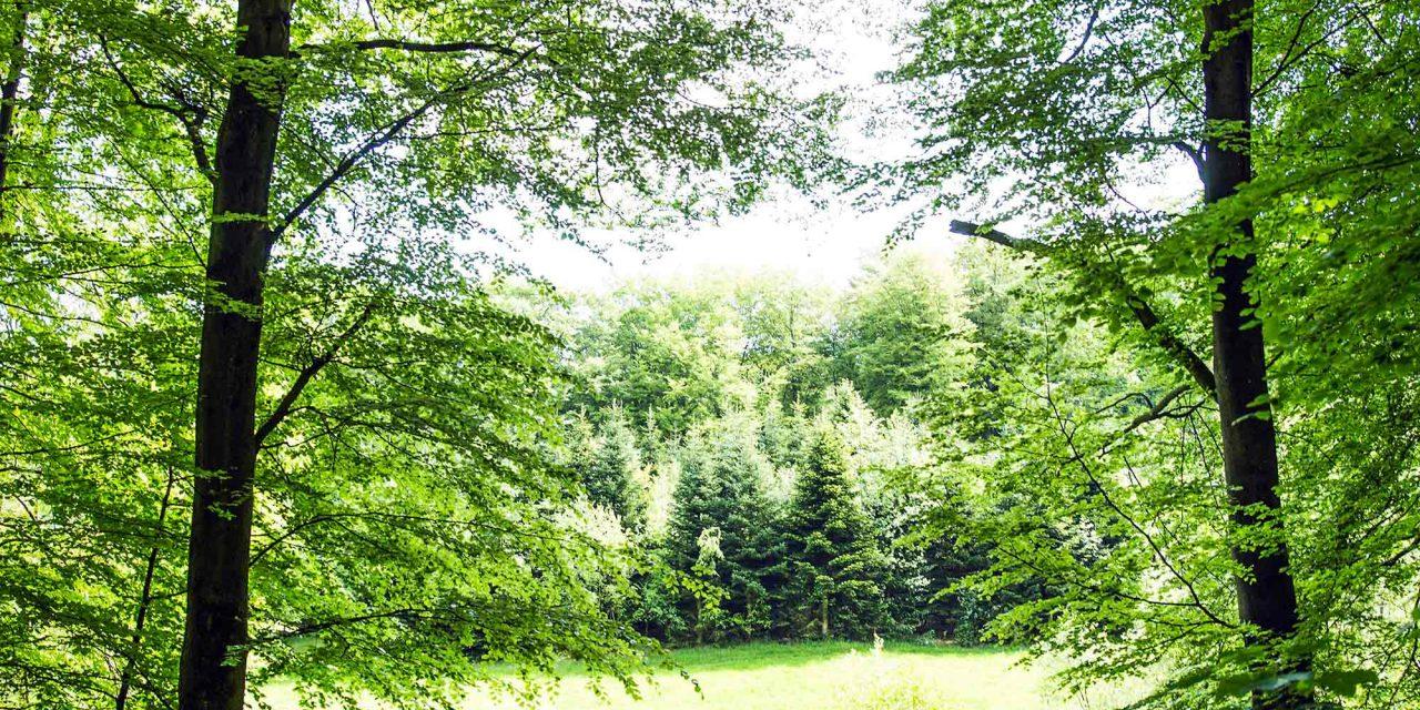 Skovbrug, klima og biodiversitet i fokus på Økolariet