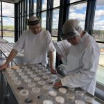 Lantmännen Cerealia Danmark fastholder BRC Grade AA certifikation
